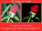Im Namen der Rose...