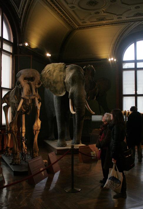 Im Naturhistorischen Museum