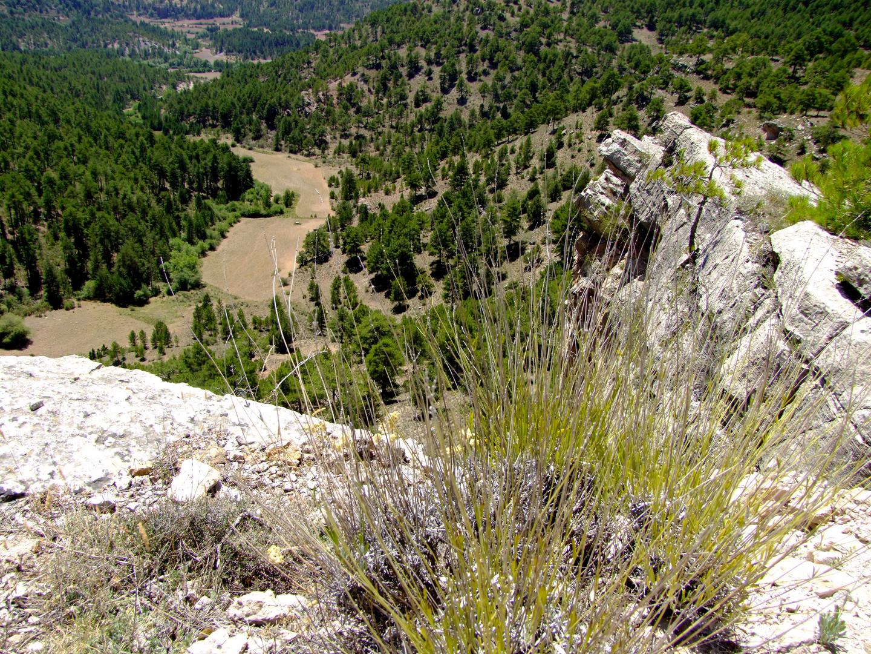 Im Naturpark Alto Tajo, Castilla-La Mancha, Spanien
