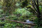 im Naturpark Guanayara 2