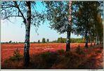 Im Naturpark °Niederlausitzer Heidelandschaften°