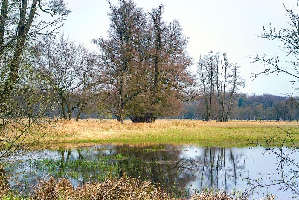 Im Naturschutzgebiet Mönchbruch - 1. April 2016