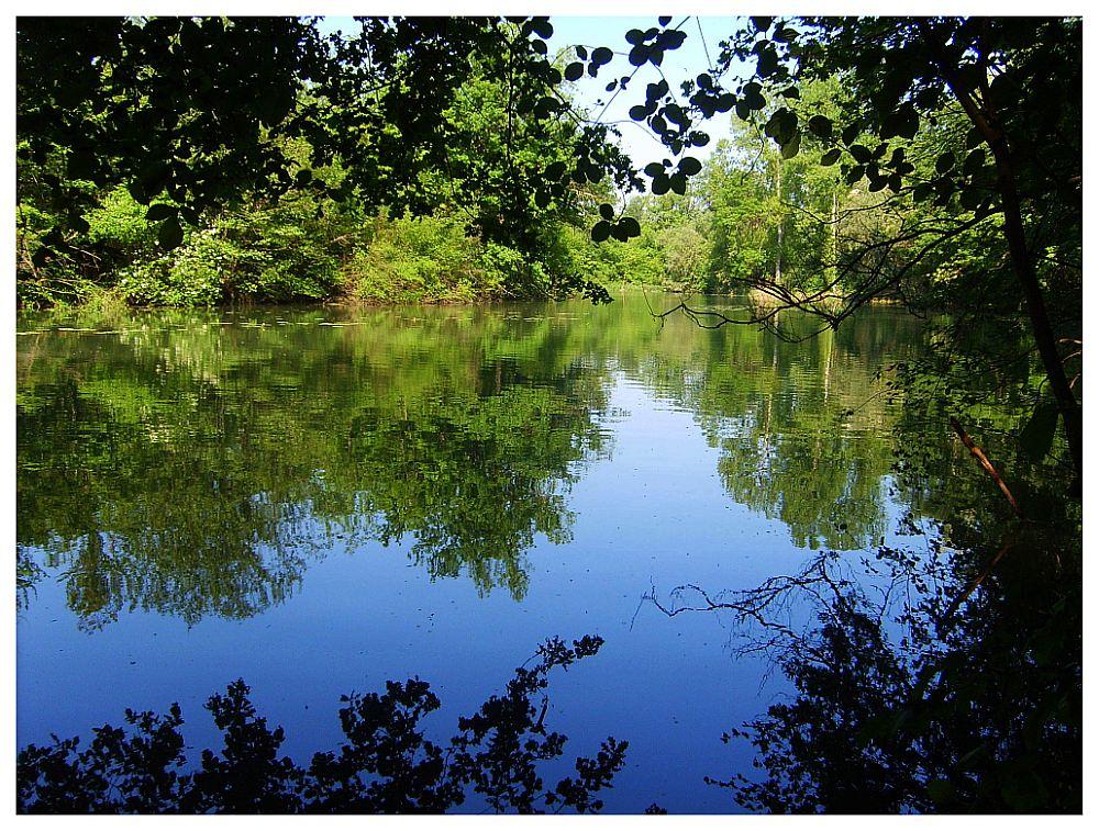 Im Naturschutzgebiett Taubergiessen