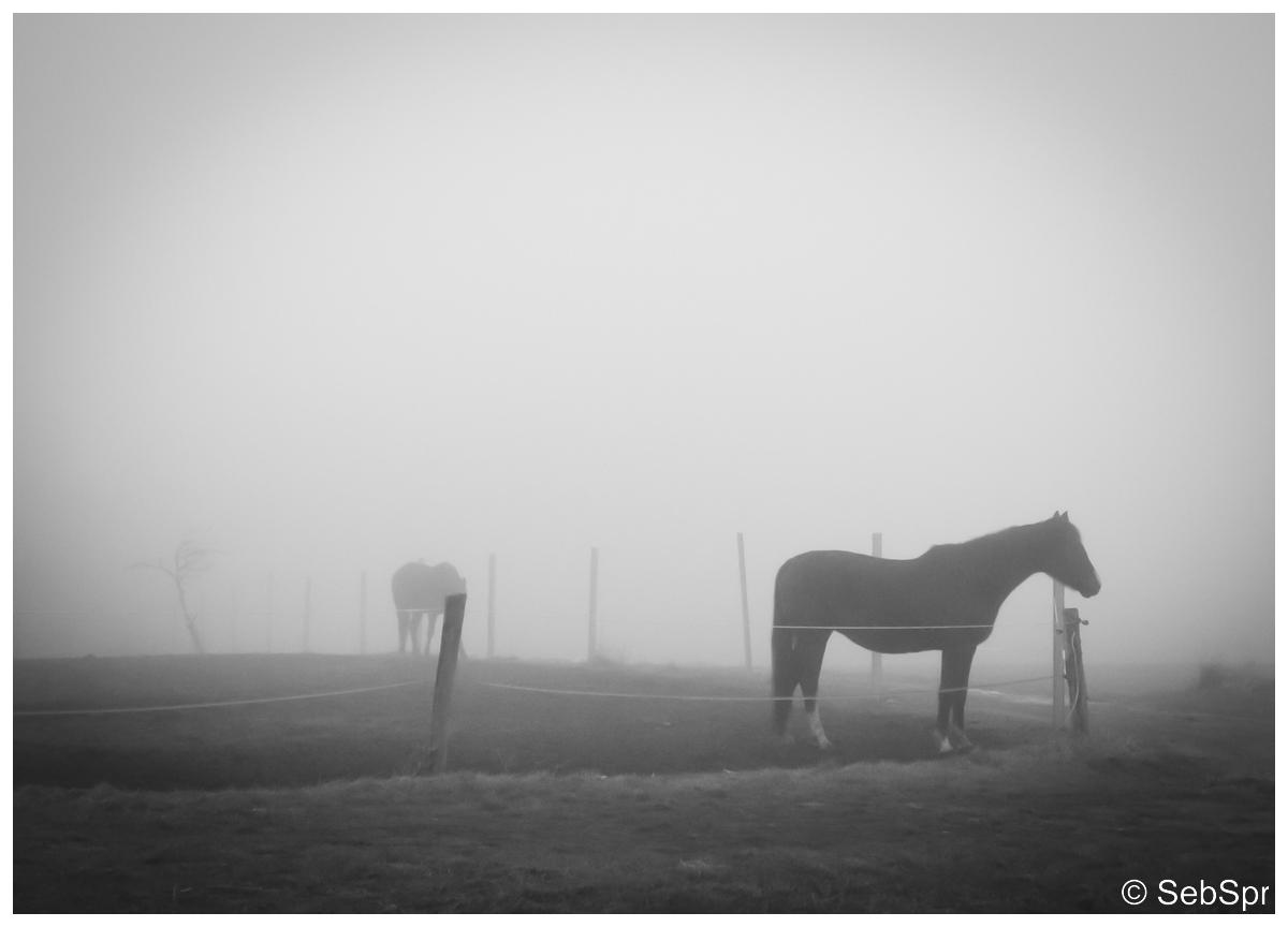 | Im Nebel |