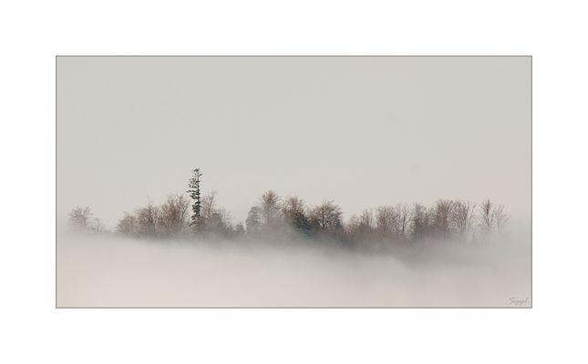 Im Nebel - 2. Versuch