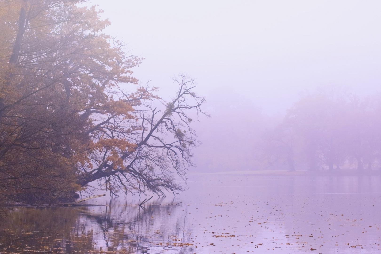 im Nebel