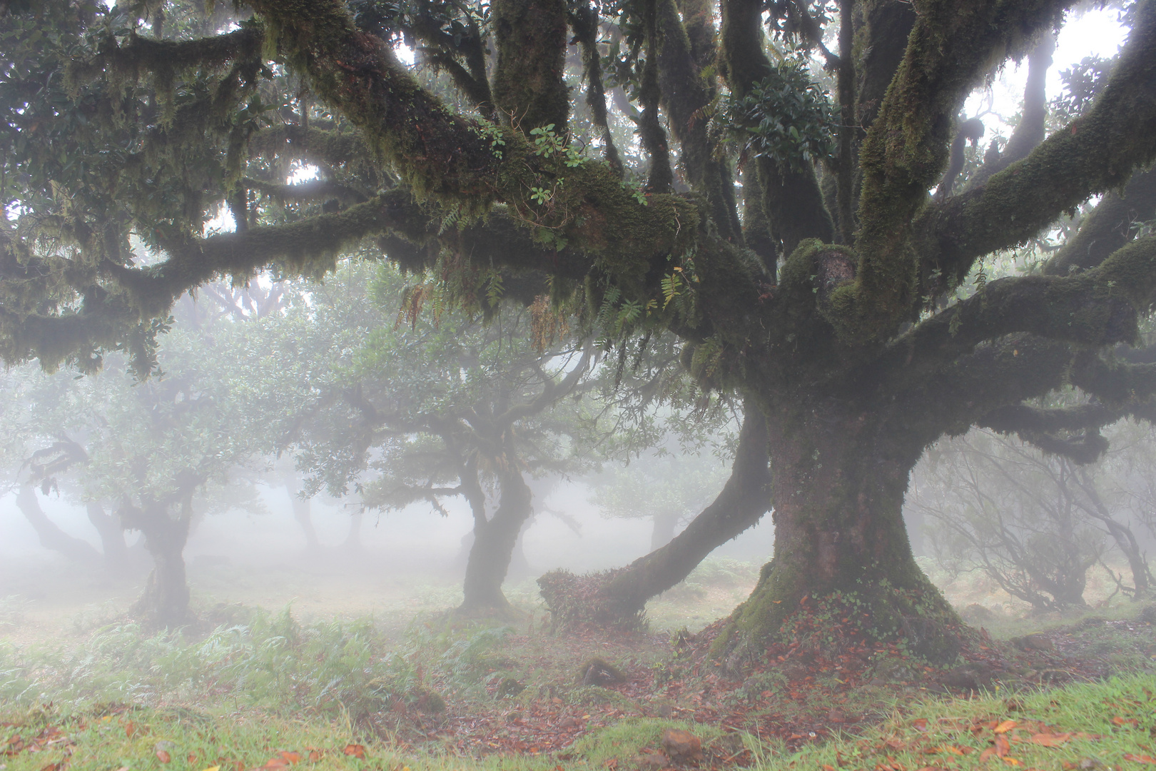 """""""Im Nebel"""""""