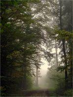 Im Nebel unterwegs