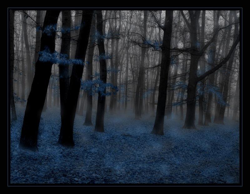 Im Nebel verschleiert...