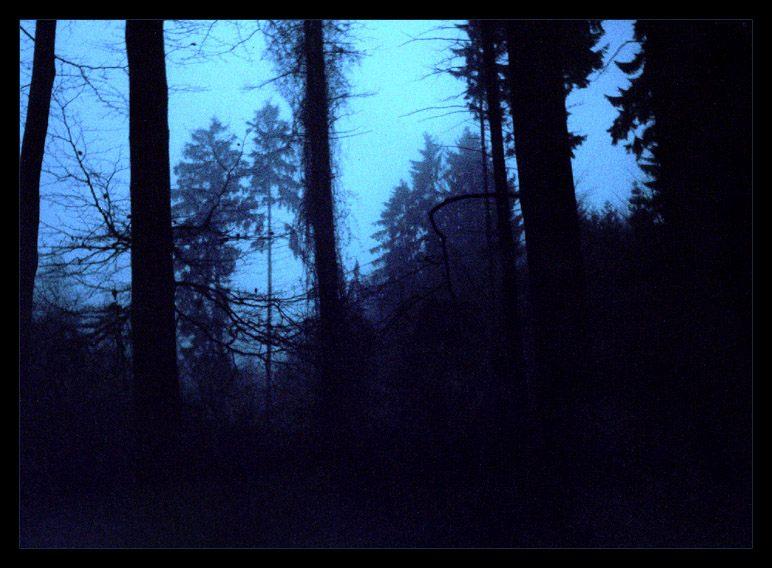 Im Nebelwäldern ...