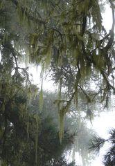 Im Nebelwald.....