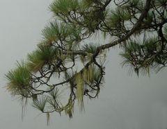 im Nebelwald...