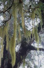 Im Nebelwald....