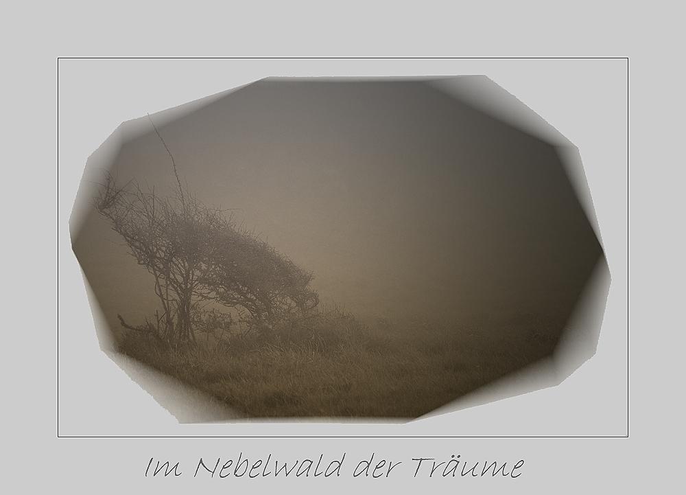 im nebelwald der träume