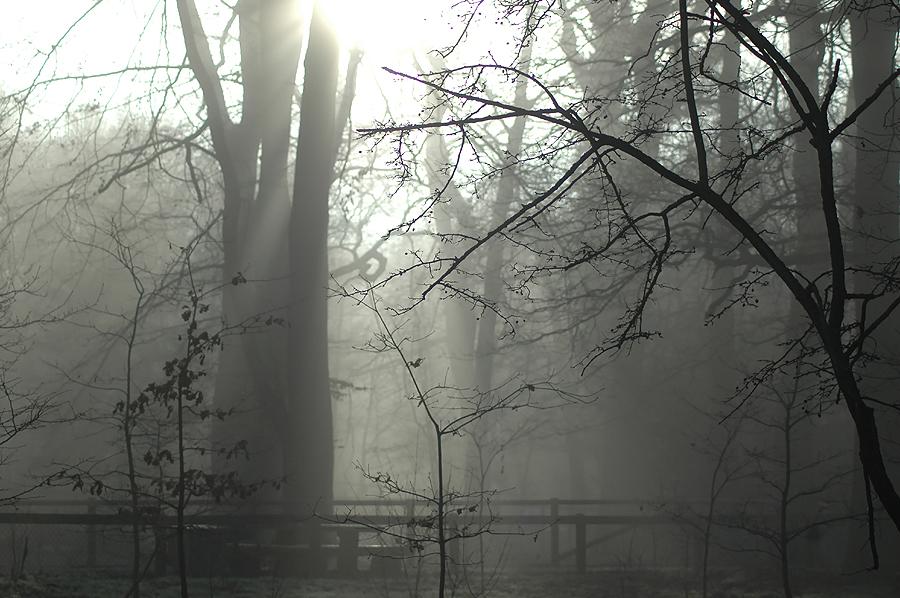 Im Nebelwald IV