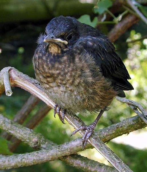 Im Nest war`s schöner