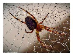 Im Netz der Spinne....