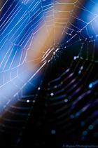 Im Netz der Spinne...