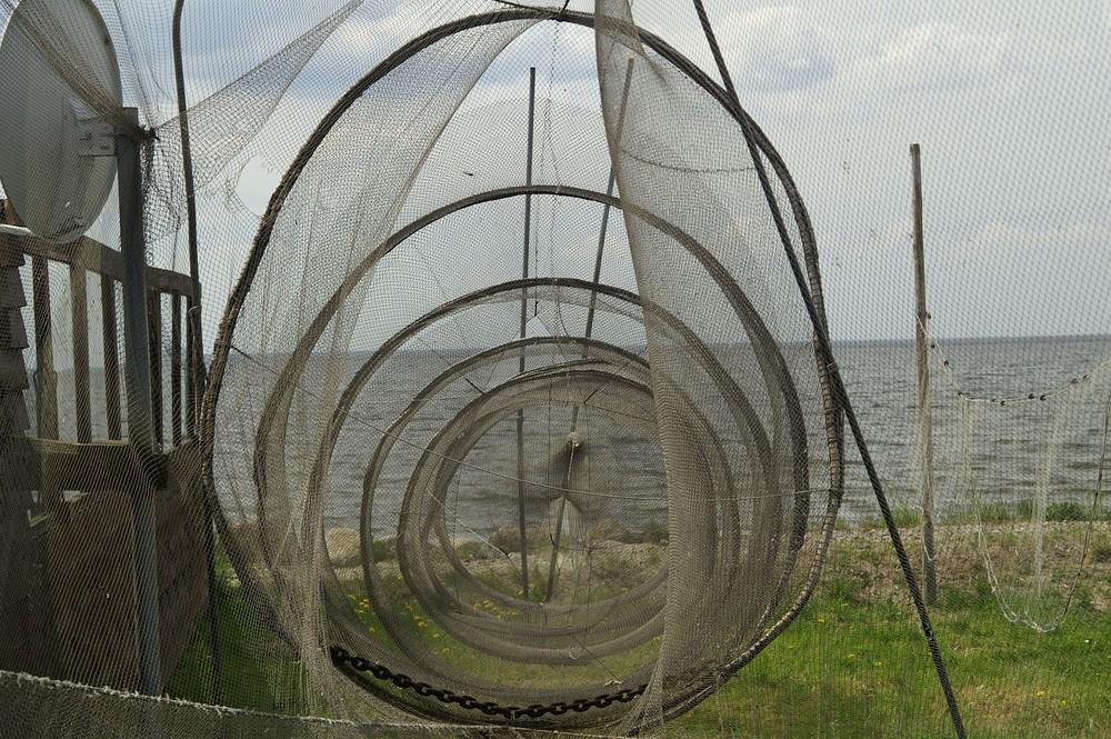 Im Netz gefangen