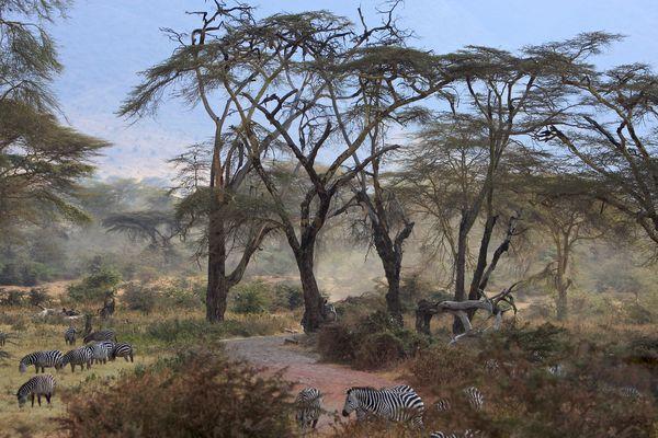 Im Ngorongoro Krater / Tansania