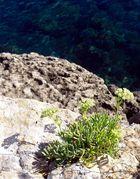 Im Norden von Ibiza - Portinatx 5