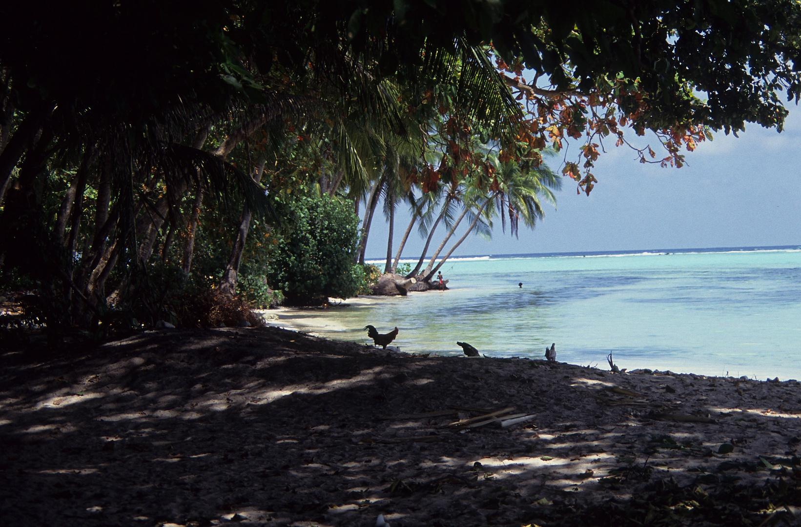 im North Malé Atoll