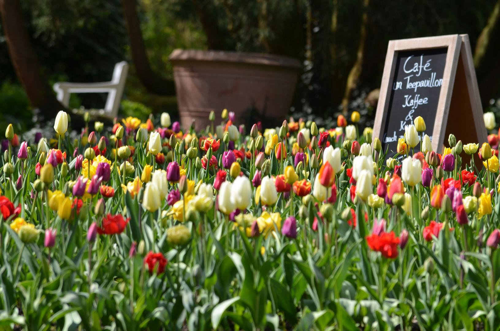 Im Oldenburger Schlossgarten gibt es Kaffee & Kuchen