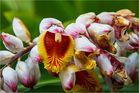 im Orchideenpark 2