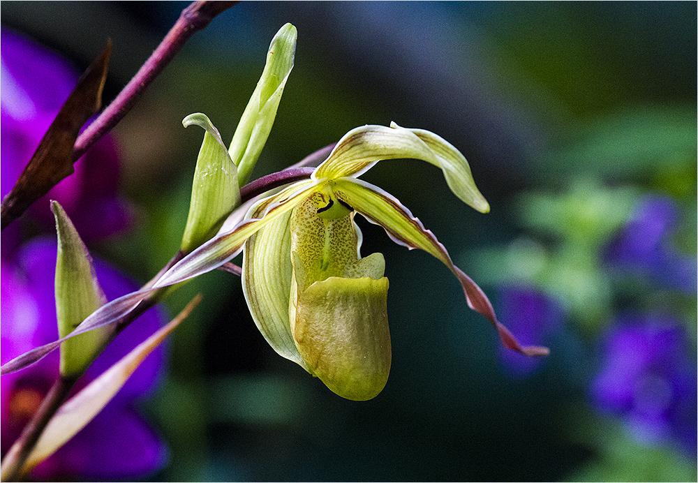 im Orchideenpark 4