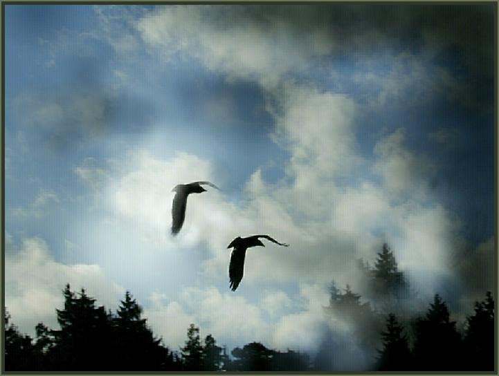 - Im Paarflug über den Wipfeln -