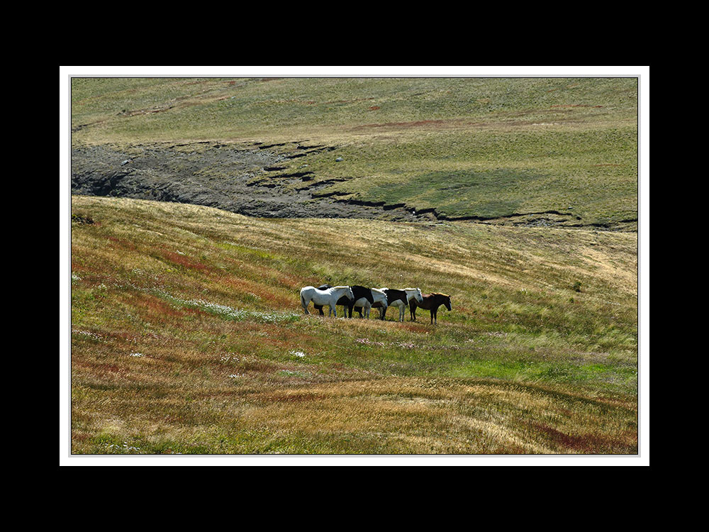 Im Paine Nationalpark 01