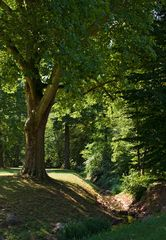 Im Park (1)