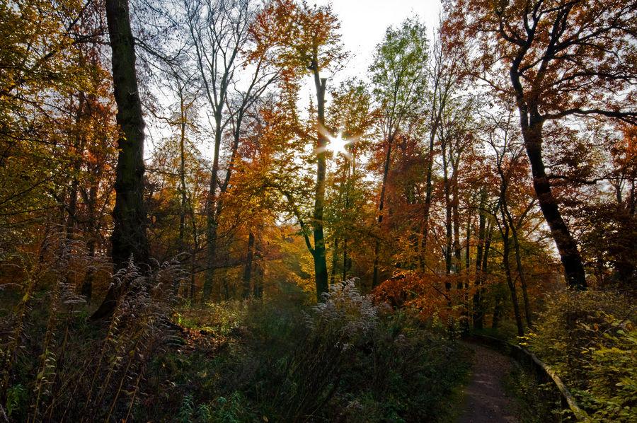 Im Park Schloß Glienicke