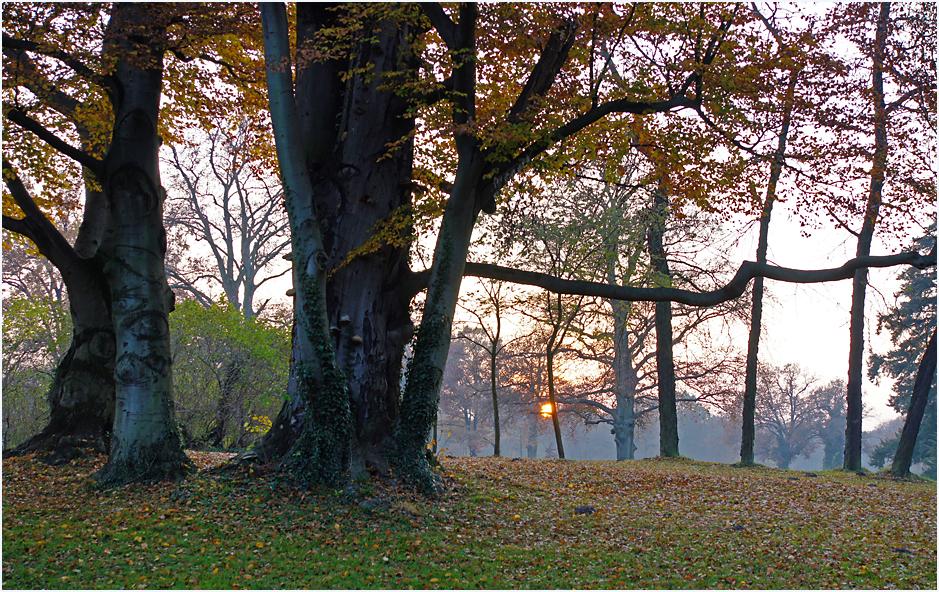 Im Park von Sanssouci, 06.11.11 – 07