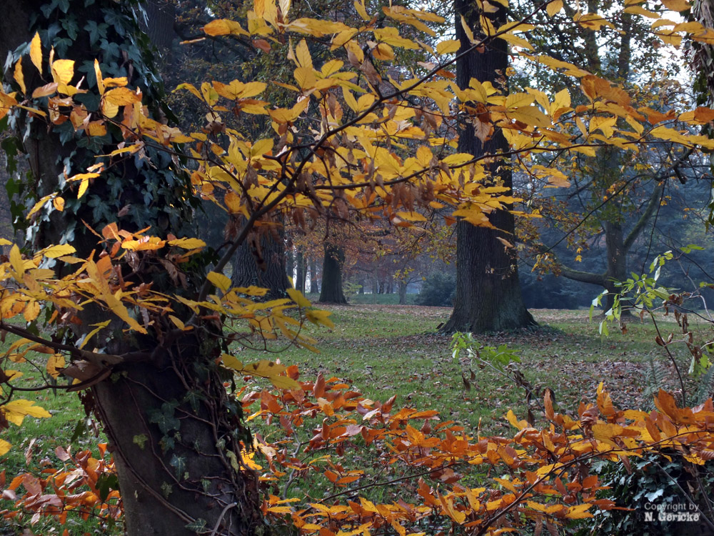 Im Park von Schloss Dyck I