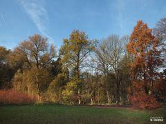 Im Park von Schloss Dyck III