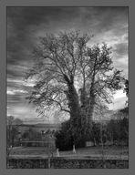 Im Park von Schloss Lichtenwalde steht ein alter Baum