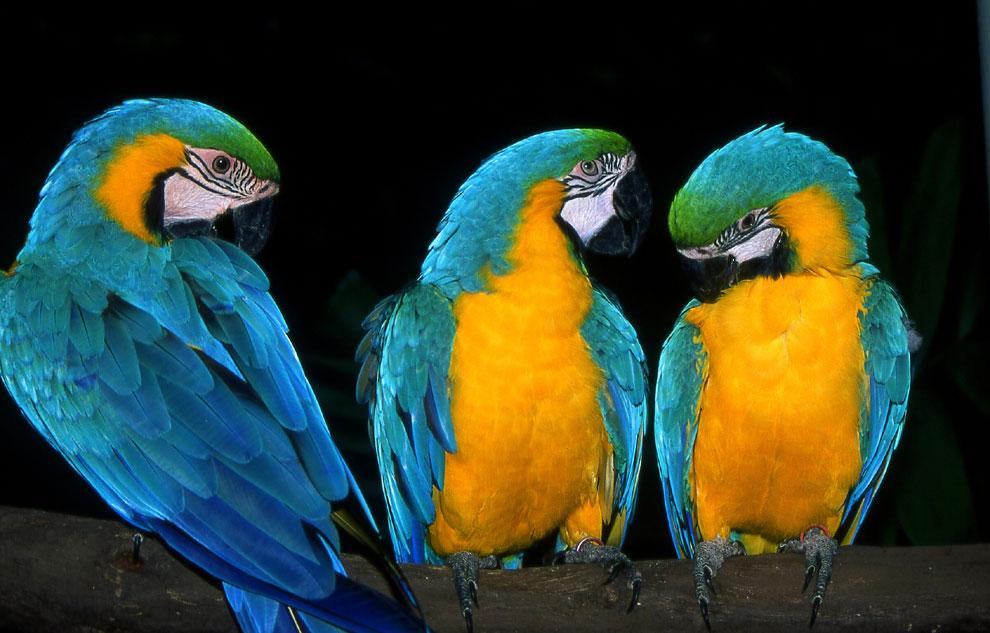 Im Parrot Jungle....