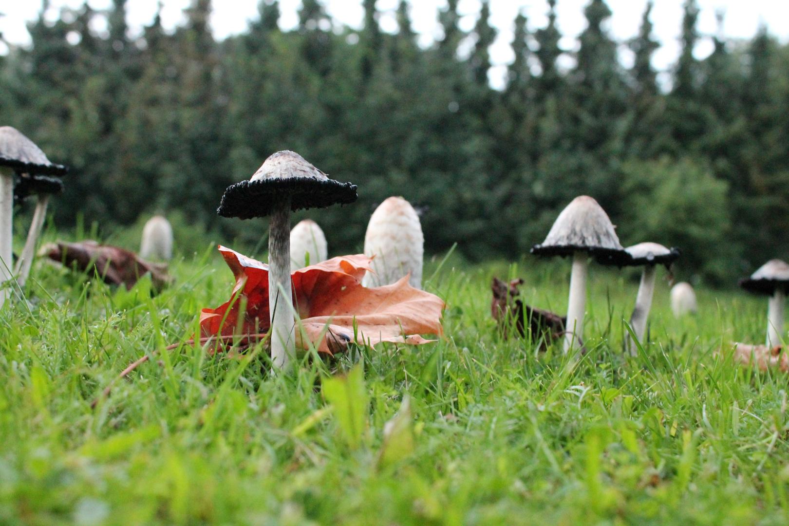 Im Pilzwald