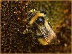 Im Pollendschungel*
