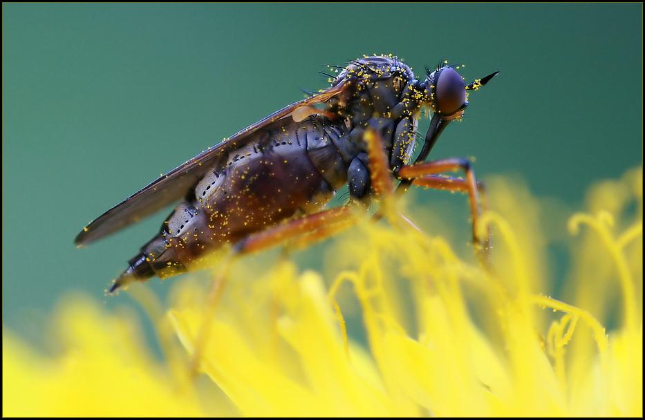 Im Pollenrausch ...
