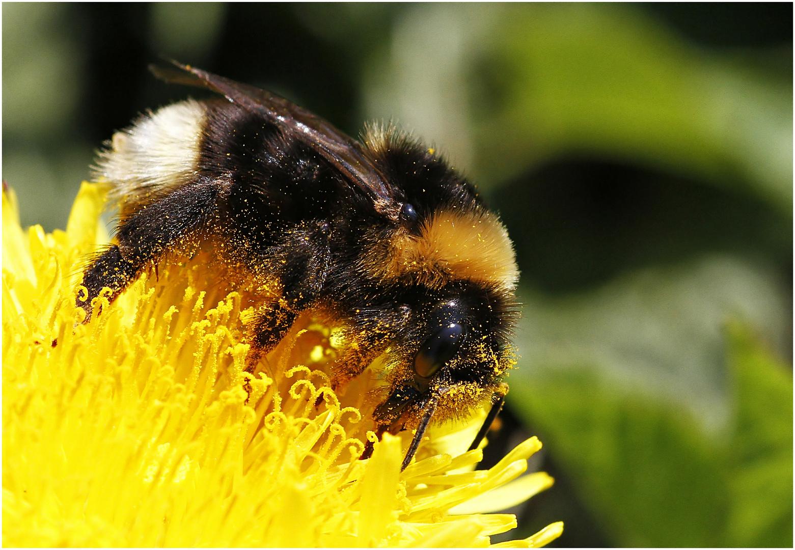 im Pollenrausch