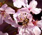 Im Pollenwald
