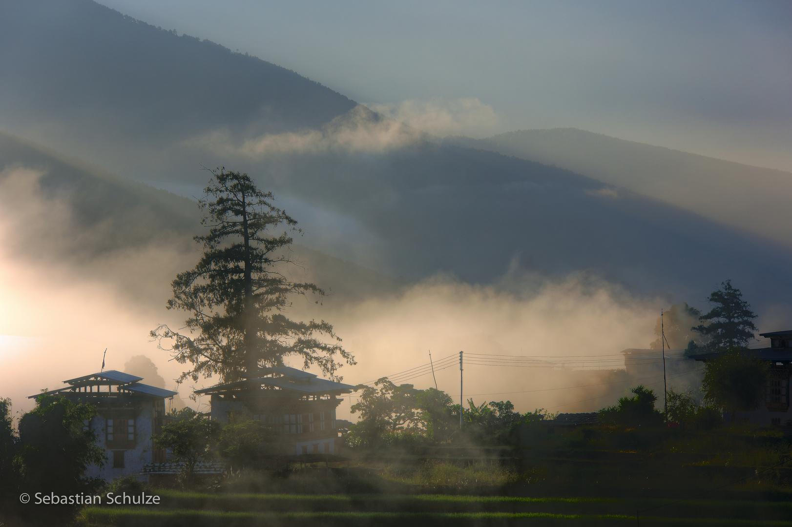 im Punakha-Tal #01