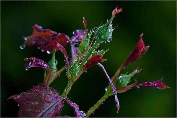 Im Regen . . .