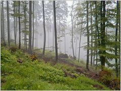 Im Regenwald 2