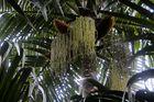 im Regenwald von La Digue/Seychellen