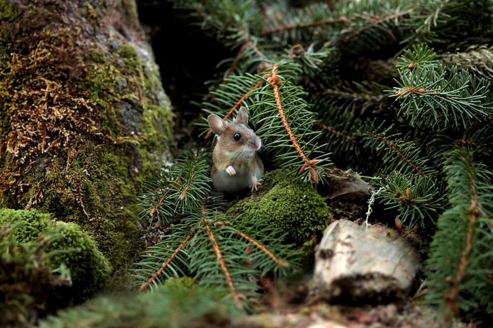 Im Reich der Maus