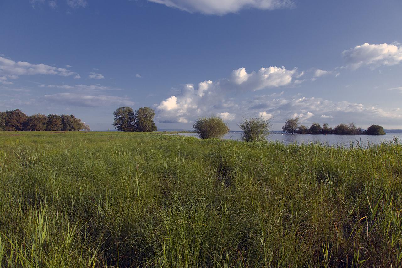 Im Rheindelta