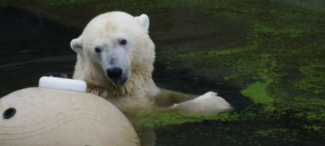 Im Rostocker Zoo